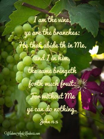 I am the Vine